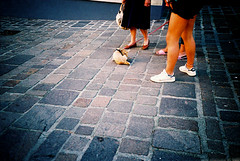 Street cleaning (Stephen Dowling) Tags: travel summer italy film 35mm xpro crossprocessed sanremo cosinacx2 agfact100precisa