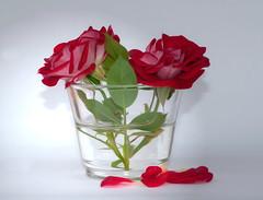 two roses (Xtraphoto) Tags: red roses two stilllife rot art rose stillleben kunst photoart glas zwei fotokunst