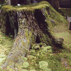 Moss garden (Mark Dries) Tags: colour green 6x6 japan mediumformat kyoto slide positive provia planar 400iso hasselblad500cm mossgarden markguitarphoto markdries