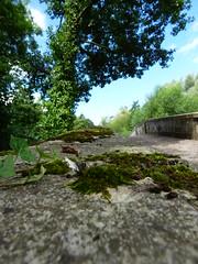 P1050220 (ruthbuckley33) Tags: stone wall texture moss foliage leaves bridge sky clouds tree shade light ireland nature outdoors