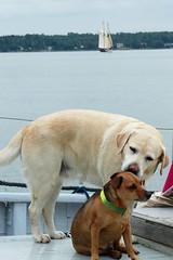 Vnner (evisdotter) Tags: friends dogs pets boat sooc ship sjkvarteret sjdagarna mariehamn land