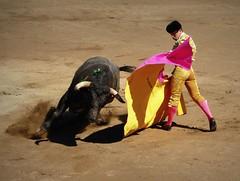 Guillermo Valencia (aficion2012) Tags: ceret 2016 novillada corrida toros bulls bull fight novillos france francia d mario y hros de manuel vinhas torero matador novillero capear capeando capa capote guillermo valencia