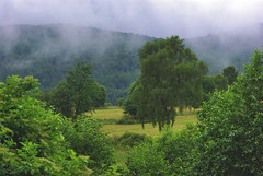 Hay meaddows (Hejma (+/- 4500 faves and 1,5milion views)) Tags: bieszczady national park polish landscape darkclouds fog tree forest meadows wildflowers grazing hills