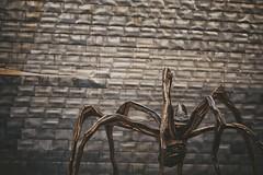 Maman in Bilbao (CiccioNutella) Tags: maman bourgeoise spider sculpture guggenheim museum gehry frank architecture art detail details modern modernism bilbao spain giant bronze titanium panels contemporary deconstructivism building
