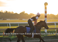 Sunrise at Saratoga (Rock and Racehorses) Tags: websunrisesaratogaasmussentraineeska6345page2sarahandrew ny thoroughbred racehorse saratoga nyra sunrise scenic oklahoma