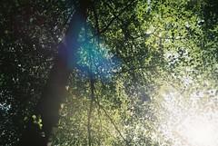 Tree (Lotte van der Krol) Tags: tree nature forest
