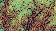 extraa tarde (ojoadicto) Tags: nature naturaleza ramas arboles trees colorsaturation digitalmanipulation manipulaciondefotos artisticphotography