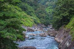 Silent Valley National Park (Vishnu T Suresh) Tags: silent valley national park nationalpark kerala nilgirihills mannarkkad palakkad southindia silentvalley rainforests