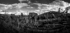 Fault line (C Lindberg) Tags: landscape blackandwhitelandscape bw panorama deadtrees woods faultline landscapepanorama blackandwhitepanorama lrjen highcontrastlandscape olympus em10