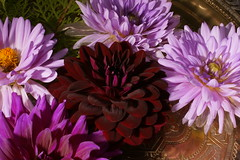 _DSC0203 (wdeck) Tags: meingarten flowers sonya700 blossoms blte malve hibiskus