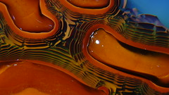 Liesegang Standing wave (kelemengabi) Tags: liesegang selfreinforcing vortex gabrielkelemen sphere spiral interference nonnewtonian nonlinear osmotic precipitation plasmogenia herrera alfonsol