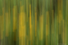 Green Vertical (Dpanchaud) Tags: green londonwwt yellow abstract icm photographers 2015 iaingreen evening august colour
