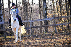 011 (d315thedeity) Tags: horse arab arabian equine