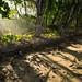 Raios de sol pela floresta tropical