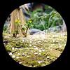 "The sprouting (karakutaia) Tags: sun tree love nature japan paper temple tokyo heart afotando ""flickraward"" flickrglobal allbeautifulshotsandmanymoreilovenature flowerstampblackandwhite transeguzkilorestreetarturbanagreatshotthisisexcellentcontestmovementricohgxr""serendipitygroupbluenatureicapturecardjapanesepapercardflickraward5""j trasognoerealtabstractelementsorganizersimplysuperb"