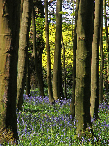 May in Elkin Wood