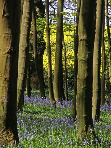 May in Elkin Wood