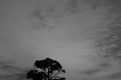 Always Looking Up (MikeSpeaks) Tags: sky tree pine landscape helios442
