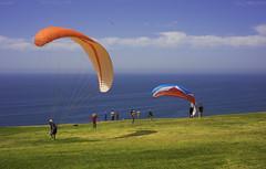 DSC09032 (mingzkl) Tags: california blue cliff beach sandiego gliding westcoast torrypines leicasummicron35mmf28elements