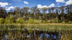 WP_20150427_16_04_44_Raw__highres (rosstek) Tags: nature landscape nokia raw fen 1020 veluwe nunspeet carlzeiss dng lumia pureview nokia1020 lumia1020 nokialumia1020