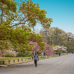 The Kyoto Guen Garden surrounding the imperial palace in Kyoto, Japan thumbnail