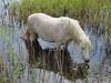 Natuurwerker (nikjanssen) Tags: horse nature belgium explore paard poel natuurbeheer abigfave diepenbeek simplysuperb