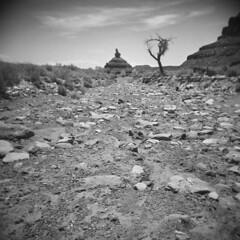 Valley of the Gods #4 (LowerDarnley) Tags: holga valleyofthegods utah mexicanhat southernutah wilderness wash drywash deadtree butte erosion rocks