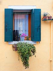 Window and boots (SLpixeLS) Tags: italy italie italia venise venezia burano house maison frontage faade window fentre color couleur colorful color plant plante boots bottes
