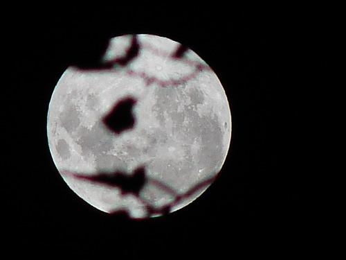 Foco en la luna.   por ohb
