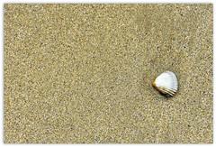 semplicemente ... (miriam ulivi) Tags: miriamulivi nikond7200 france normandie arromanches spiaggia beach sabbia sand conchiglia shell minimal nature