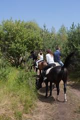 5D_IMG_6555 (Jeroen Kransen) Tags: bulgarije bulgaria    horse horseback equestrian horseriding paardrijden paardrit rodopen rhodopes