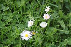 Blumen Wiese 2 (sb.estate) Tags: flowers blue sun white soft wiese blumen ligt yelow sunn sumer blosom purpel collor jelow