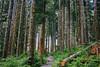 IMG_4227.jpg (Backpacking With Bacon) Tags: washington northerncascades hiking mtpilchuck granitefalls unitedstates us
