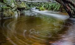 Snug River #58 (phil hirst) Tags: snug tasmania australia au pentaxk1 stream water rainforest smcpentaxa50mmf17 longexposure