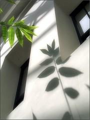 (Tlgyesi Kata) Tags: botanikuskert botanicalgarden fvszkert budapest withcanonpowershota620 summer greenhouse veghz plmahz window wall shadow