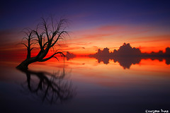 No matter how dark the night, (gusdiaz) Tags: photoshop photo manipulation composite composition digital art arte beach tree reflection reflejo beautiful vacation summer colorful colorido