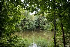 Diest 300716 04 (David Vanthienen) Tags: walk natu hike walking city stad diest hiking wandelen wandeling dieststadcitywandelingwandelenhikinghikewalkingwalknatuurnaturecitadelhalvemaandemerecocenterwarandebegijnhofbeguinage
