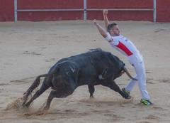 #DePaseoConLarri #Flickr - -8758 (Jose Asensio Larrinaga (Larri) Larri1276) Tags: 2016 concurso recortadores arabalava amurrio araba lava basquecountry euskalherria