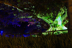 _MG_4814.jpg (Tibor Kovacs) Tags: night colours tree vivid australia events sydney projections light