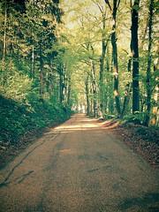 forest natur bloom wald bäume waldweg wiko (Photo: Tobias_Ungethuem on Flickr)
