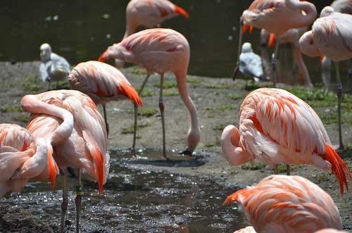 Flamingo stilt