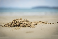 Mr. Krabs (reinhardt.tobias) Tags: beach animals strand thailand tiere stand nikon mr sommer crab ao nang reise krabbe 247028 krabs 2015 d610