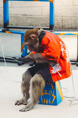 Just taking a break. (expatwannabe) Tags: pet animals japan canon monkey tokyotower eos5dmarkii