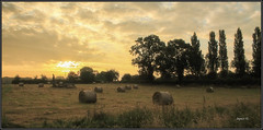Hay Bales. (Picture post.) Tags: landscape nature green sunrise hayfield poplar trees countryside summertime paysage arbre interestingness clouds harvest