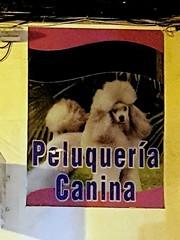 219 (charmingLaLinea) Tags: cane decay concepcion andalucia perro cadiz campo charming atomic gibraltar alternative decadence chernobyl canina peluqueria lalinea decadencia orgullo decadenza degrado gibilterra
