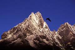 Khumbi Yul Lha (robertdownie) Tags: sky sunrise bird blue rock silhouette snow fly mountain nepal ice cliff peak himalayas steep lha tengboche yul khumbi