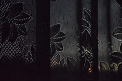 The darkness is coming (Irazi Beata) Tags: gloaming beautiful dark darkness flower patterns silence oneiric atmospheric curtains moment
