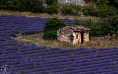 Missing Provence - 16 (BeNowMeHere) Tags: trip travel flowers summer france color colour nature landscape colorful village lavender colourful provence 500px ifttt benowmehere missingprovence