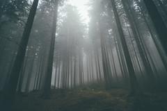 From dusk till dawn. (Bokehm0n) Tags: park wood travel sun mist reflection tree nature weather fog rural germany landscape outdoors dawn flickr folk earth fair explore environment 500px vsco vscofilm