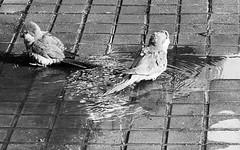 Bath (Aroca_Antonio_Cainite62) Tags: bn ricoh streetphotography